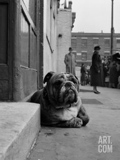 Lazy Bulldog at Camden Town