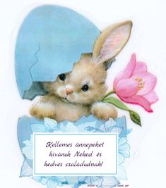 Animals And Pets, Teddy Bear, Pictures, Crafts, Easter Activities, Presents, Pets, Photos, Manualidades