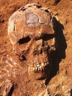 Saharan remains may be evidence of first race war, 13,000 years ago - Archaeology - Science - The Independent