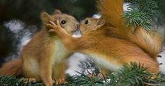 Squirrel Kisses | The 25 Cutest Animal Kisses