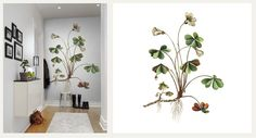 Rebel Walls, Botanica.  Nature, Wallpapers.