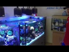 Check out the amazing display tanks at cairns marine!