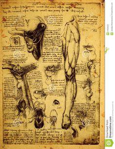 Leonardo Da Vinci Anatomy Sketches - Bing Images