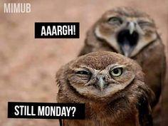 Still Monday