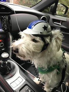 I bought a sports car and couldn't resist getting little Hugo a racing helmet. http://ift.tt/2hmilcf
