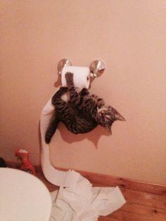 25 Cute Cats Make Your Life Happier | PicturesCrafts.com