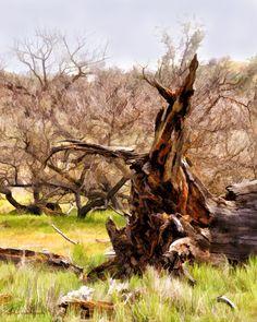 Oak tree, tree, art