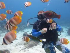 Angol Point Dive Site in Boracay Island – Philippines (Reviews)