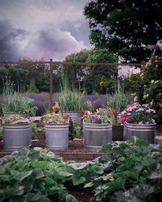 Come experience a luxury farm stay at Evergreen Acres Farm on Bainbridge Island, Washington. Veg Garden, Vegetable Garden Design, Fruit Garden, Garden Path, Dream Garden, Farm Gardens, Outdoor Gardens, Grace Farms, Vegetable Planters