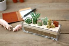 【楽天市場】【サボテン・多肉植物 5種類 寄せ植え(怪魔玉入り)/ガラスレクト】:サボテン・多肉植物 SabotenStyle