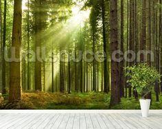 Panoramic Woodland mural wallpaper room setting