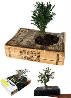 Use books/magazines as planters for small plants. Perfect way to recycle old magazines.