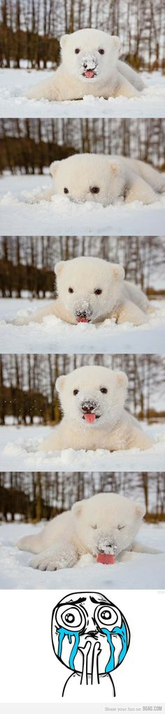 Polar Bear Baby in His First Snow by Tweeets