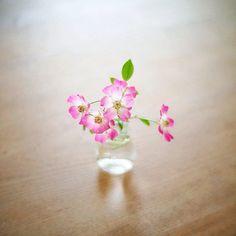 *今日は母の日なんだね…  ありがとう!と云えるお母さんが居るって凄く幸せな事だよね。2012.05.13 Sun. - @life6261- #instagram
