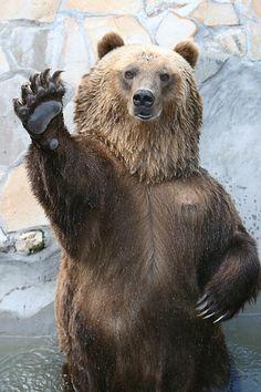 sic em #Baylor bear! love this!
