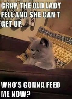 28 Cute and Funny Animal Memes You Need #funnyanimals #funnymemes #amazinganimals #funnydogs #funnycats