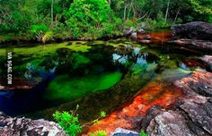 "This Colombian river is called ""The River of Five Colors"", is considered the most beautiful river in the world ."