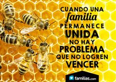 Lo que las abejas me enseñaron acerca de proteger a mi familia.