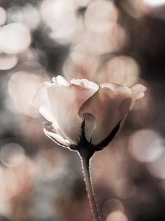 touching the light by Kulrudee  Khemkum on Fotoblur | Flower Photography
