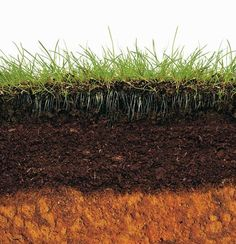 Gardeners obsess over that stuff in the ground. Year after year, we throw potions and powders at it to break it apart and build it up. But most people don't know dirt about soil. That's a big problem.