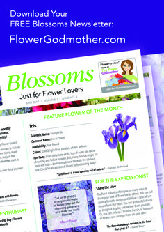 Blossoms Newsletter For You Flower Lovers! Visit Flowergodmother.com to get the newest issue of our Blossoms Newsletter! flowerslovers http://gelinshop.com/ppost/531284087282044404/