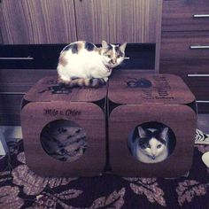 Haha that is cats for you fighting over the same pod even though they have one each!  thank you so much for buying from us again  you have two really gorgeous kitties   #cat #catsofinstagram #cats_of_instagram #catfurnature #catfurniture #catsinboxes #cattoy #INSTACAT_MEOWS #cutecat #PurrMachine #catsinboxes #catbox #Excellent_Cats #BestMeow #dailykittymail #thecatniptimes #catcube #catpod #ArchNemesis #FlyingArchNemesis #myindoorpaws #ififitsisits #cutecatcrew #catchalet #catnip…
