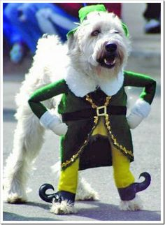 Who doesn't love a dog in an elf costume?