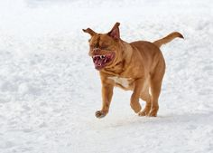 The 10 Types of Dog Aggression | Dogster