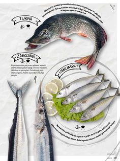 Graphics Design, page layout design, food magazine, fish page design
