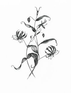 """Ink flower illustration """"Flame Lily"""" Art by KKhrysty"""