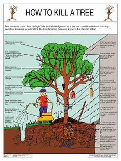 How to Kill A Tree