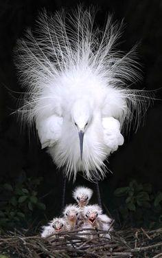 Garcas / Heron Bird