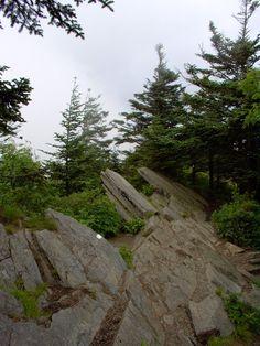 Appalachian Trail (Narrow Ridge)  on Trail between Clingman's Dome and Siler's Bald BTDT