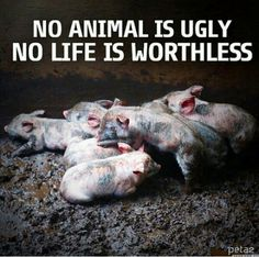 I have tried to cut down on meat consumption. Going more for veggies and fruits, etc. I will not eat veal for the way they are raised and I do not eat lobster for the way they are killed. My opinion only, you don't have to agree with me.