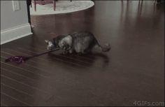 ¡Pero que loco que está el gato!