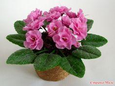 в холодних фарфорових троянд - Pesquisa Google
