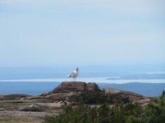 Cadillac Mountain , Bar Harbor, Maine, foto de Izabel