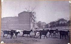 Calle del General Martínez Campos, Chamberí, 1908. Al fondo la actual Plaza de Emilio Castelar, aún con 'El obelisco de la Fuente Castellana'