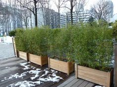 Jardinière de bambous.