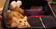20 animais que estão prontinhos para sair de férias
