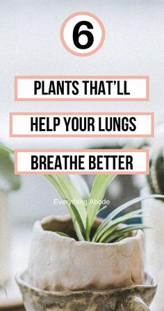 Best Indoor Plants, Air Plants, Indoor Garden, Garden Plants, House Plants, Container Gardening, Gardening Tips, Household Plants, Inside Plants