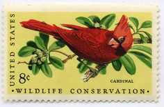 US wildlife conservation