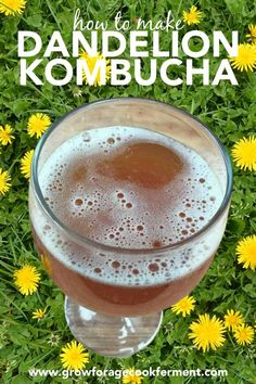 This is a post I recently wrote for the Herbal Academy, how to make dandelion and fennel kombucha. It turned out to be so tasty I had to share it with you! Kombucha Flavors, How To Brew Kombucha, Kombucha Recipe, Kombucha Tea, Fermentation Recipes, Homebrew Recipes, Dandelion Recipes, Liqueur, Greens Recipe