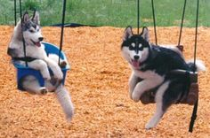 oh, you know, just hanging out on the swings...