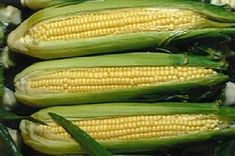 GMO - Benefits