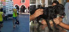 Encuentran vivo al perro al que un corredor dio una patada en mitad de una carrera:  #mexico #valladolid #yucatan #noticias #noticias #perro #perros #negrita #animales #animal #mascotas #mascota #historia #carrera #corredor #dog #dogs #pet #pets