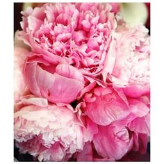 INVINCIBLE | youth-lagoon: peony roses, so pretty!, found on #polyvore. #pictures #pink