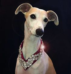 crystal dog collars