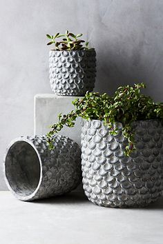 Scalloped Cement Pot #anthropologie