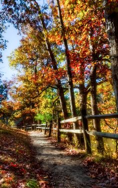 Fall colours: Path and fence (Brown County, Indiana) by Chris Harnish